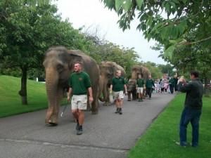 zsl-whipsnade-zoo (1)